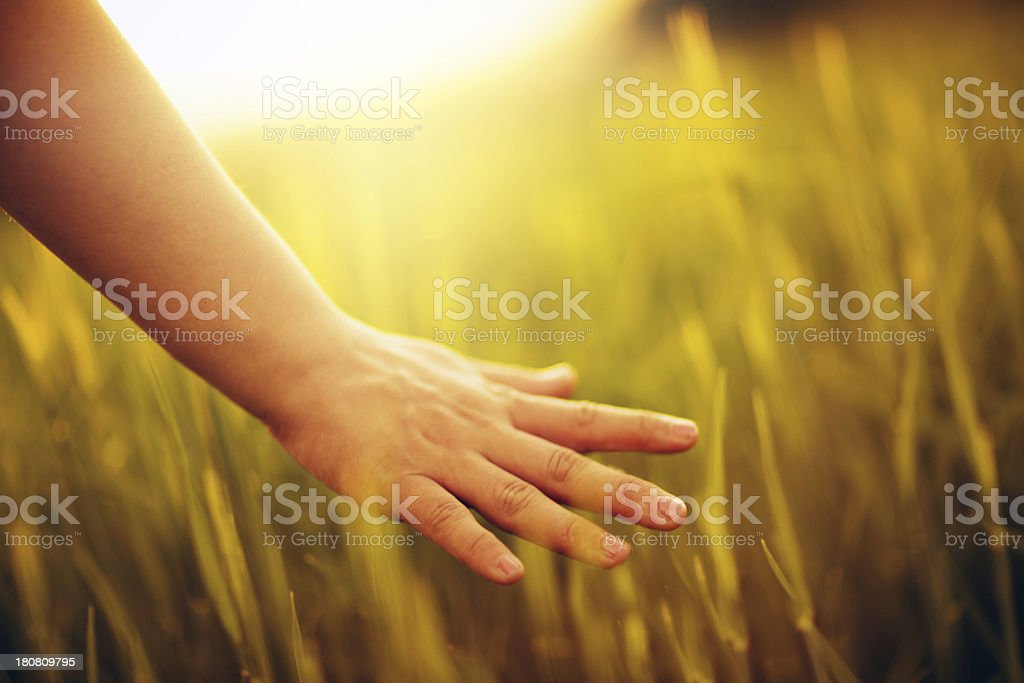 Hand in a field royalty-free stock photo