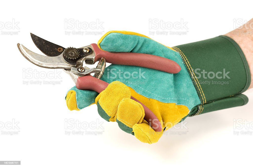 Hand in gardening glove with secateurs royalty-free stock photo