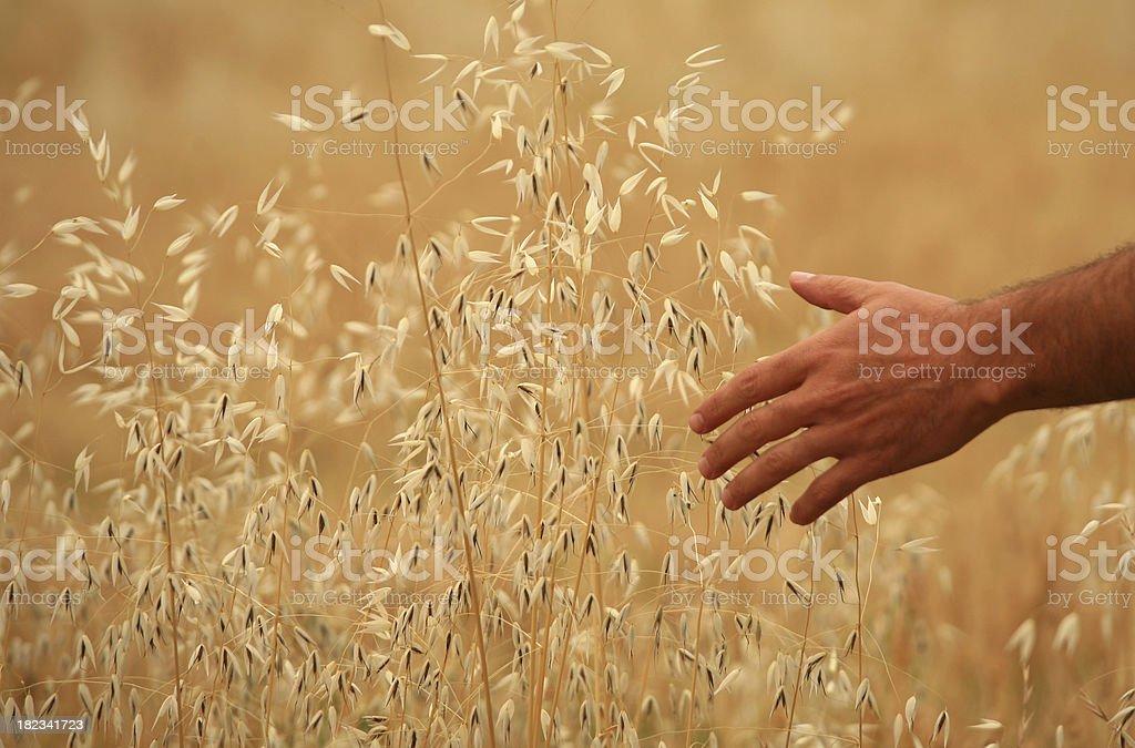Hand in Nature stock photo