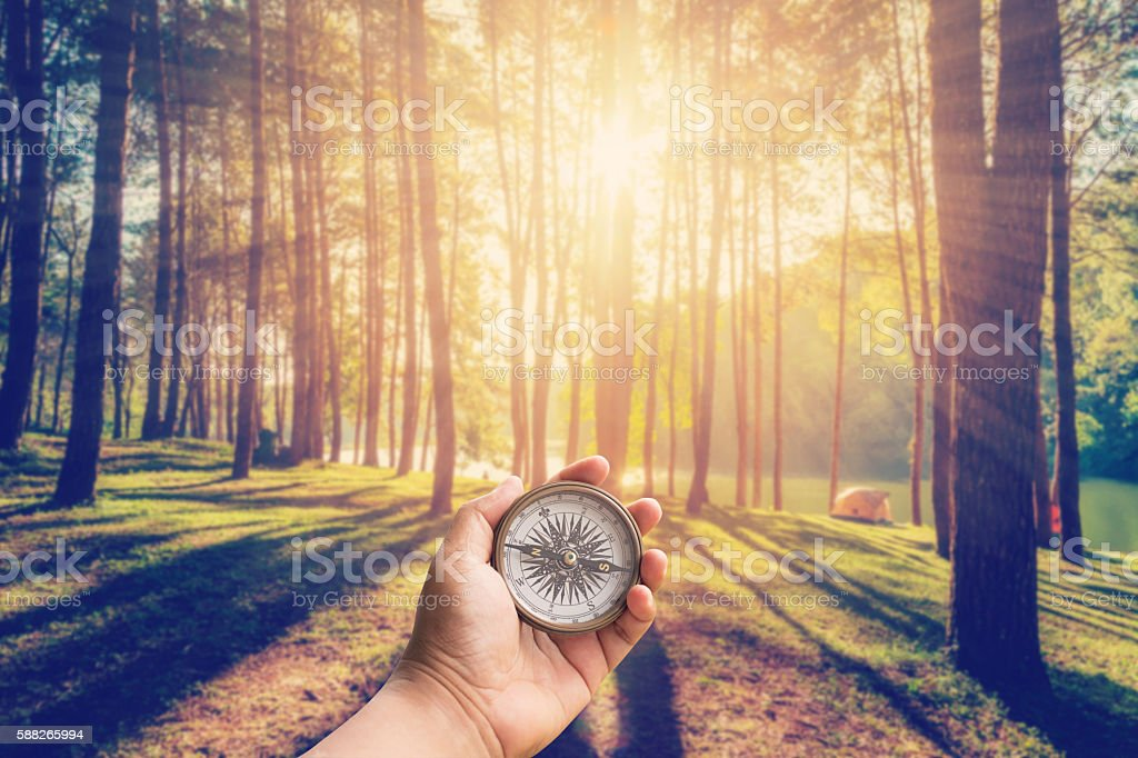 Hand man holding compass at larch forest with sunlight stock photo