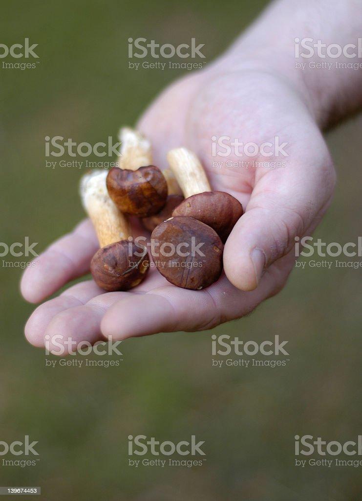 hand: mushrooms stock photo
