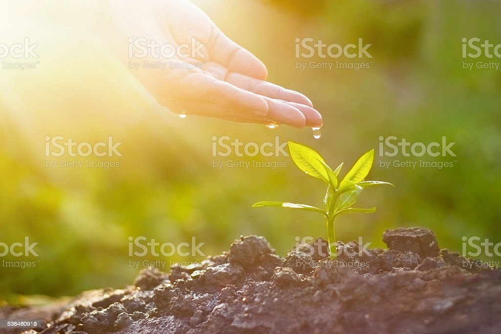 Hand nurturing and watering young plant on sunshine nature background stock photo