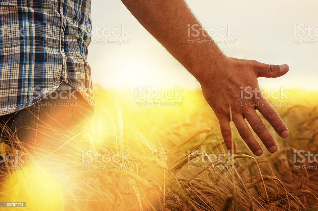 hand of a young man in the field stock photo
