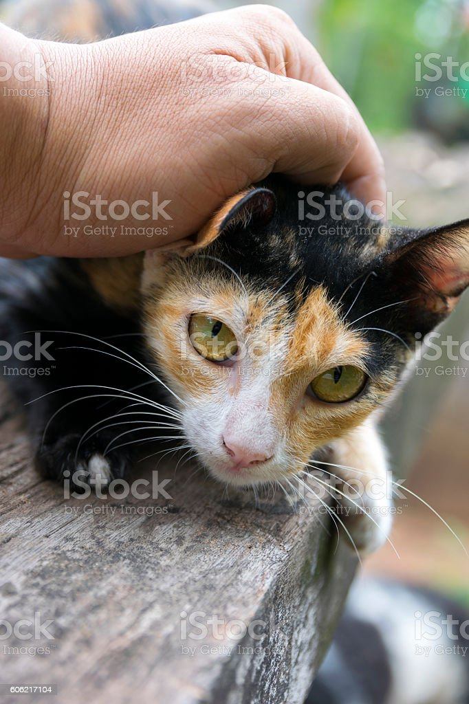 Hand of person stroking head of cat stock photo