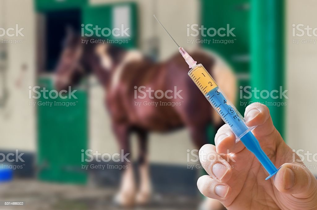 Hand of veterinarian holds syringe. Horse in background. Vaccination concept. stock photo
