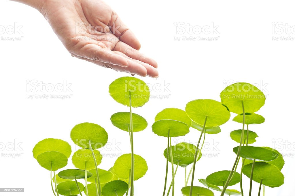 Hand of watering green plant, Environment and biology concept stock photo