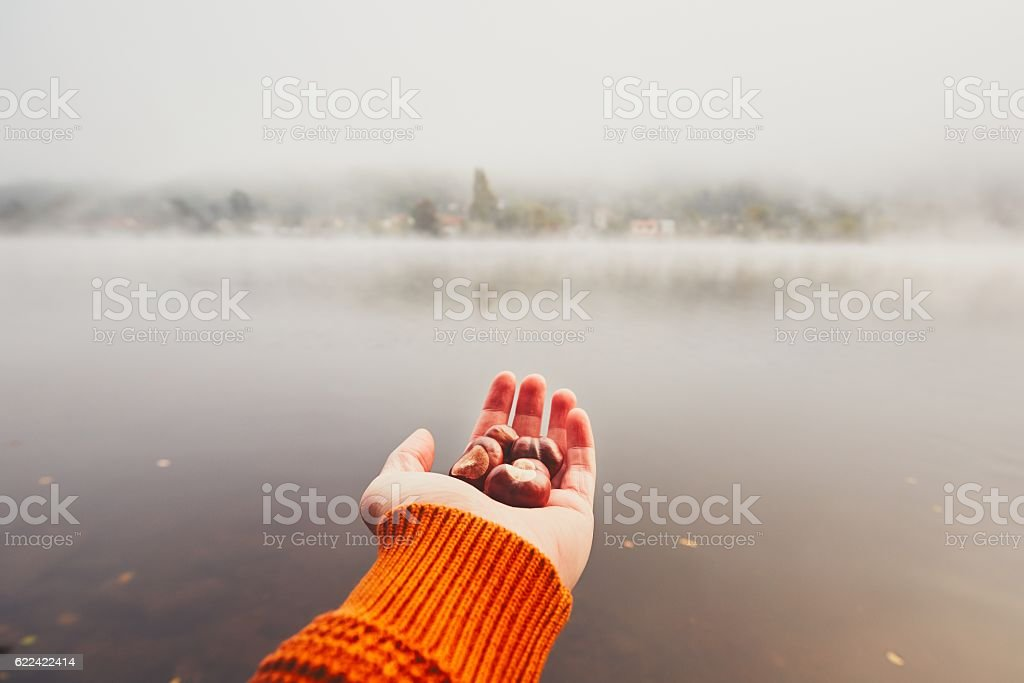 Hand of young man with handful of the chestnuts stock photo