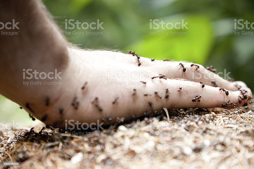 Hand on ant's nest stock photo