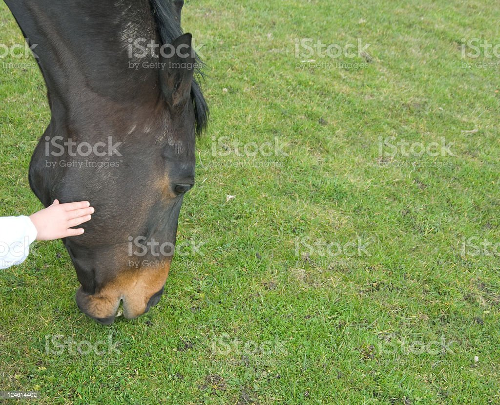 Hand on Horse stock photo