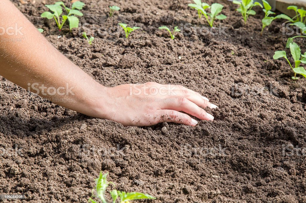 Hand on the ground in the garden. stock photo