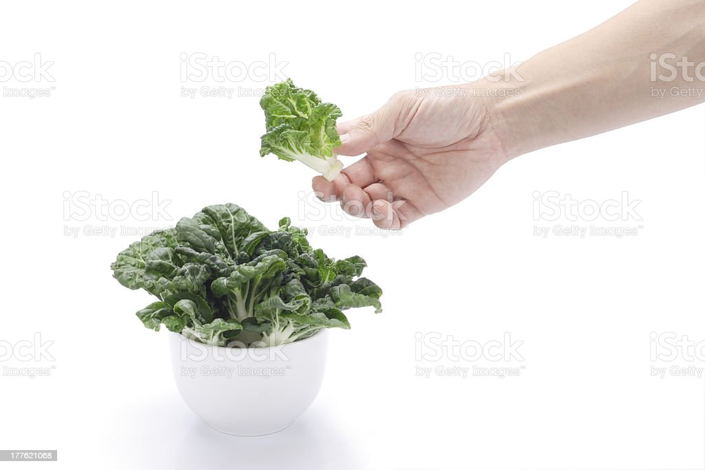 Hand picked vegetables royalty-free stock photo