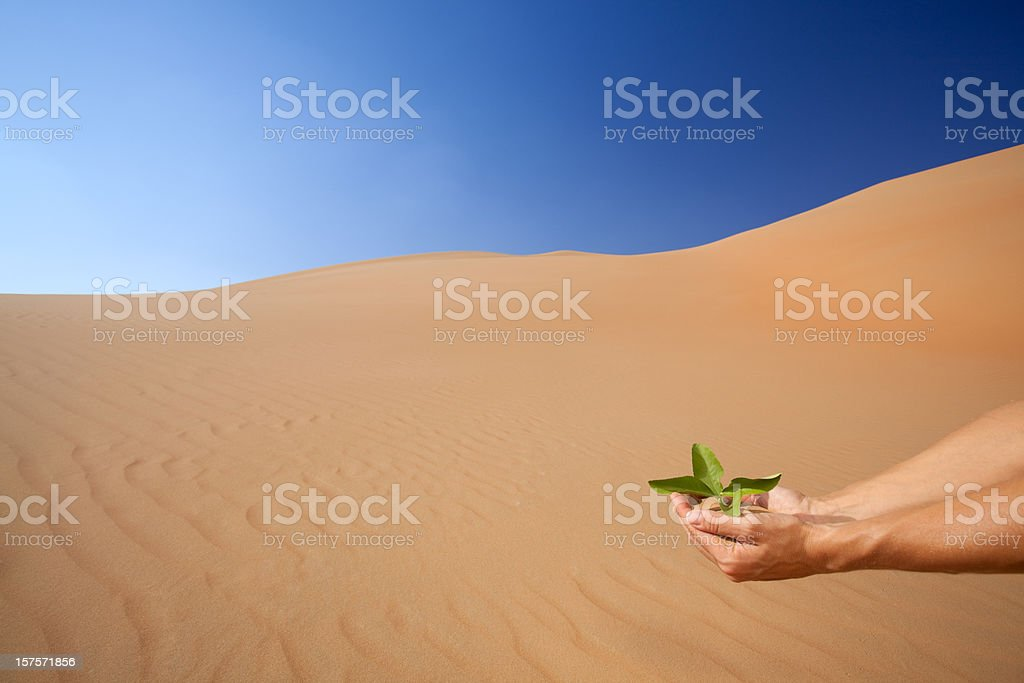 hand planting fresh green into the desert wide royalty-free stock photo