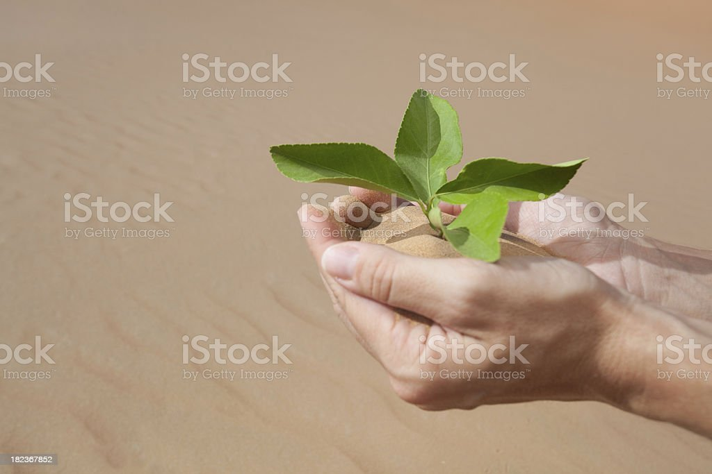 hand planting leaf into desert sand royalty-free stock photo