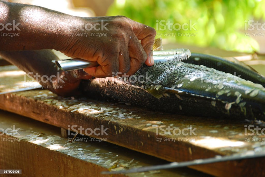 Hand removed the fish scales with a fillet knife. stock photo