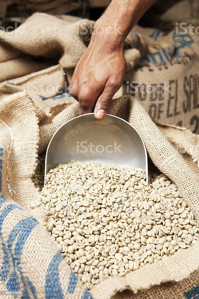 Hand Scooping Green Coffee Beans from Sack stock photo