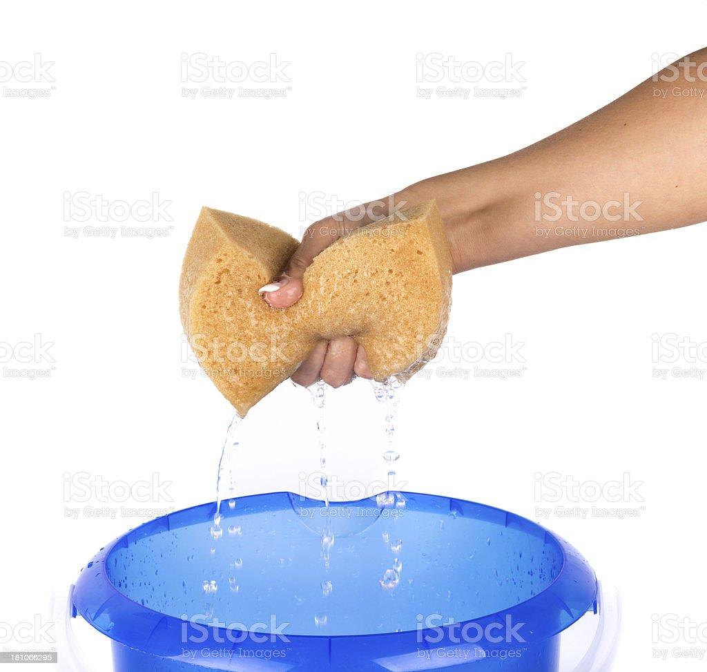 Hand Squeezing Sponge Into Bucket on white background stock photo