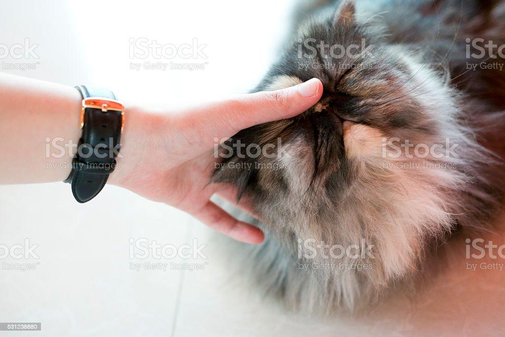 Hand Touching Sleeping cat stock photo