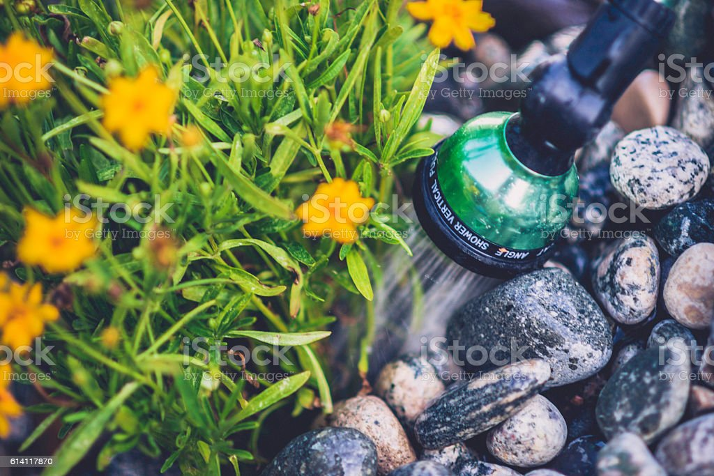 Hand watering plants in flower bed stock photo