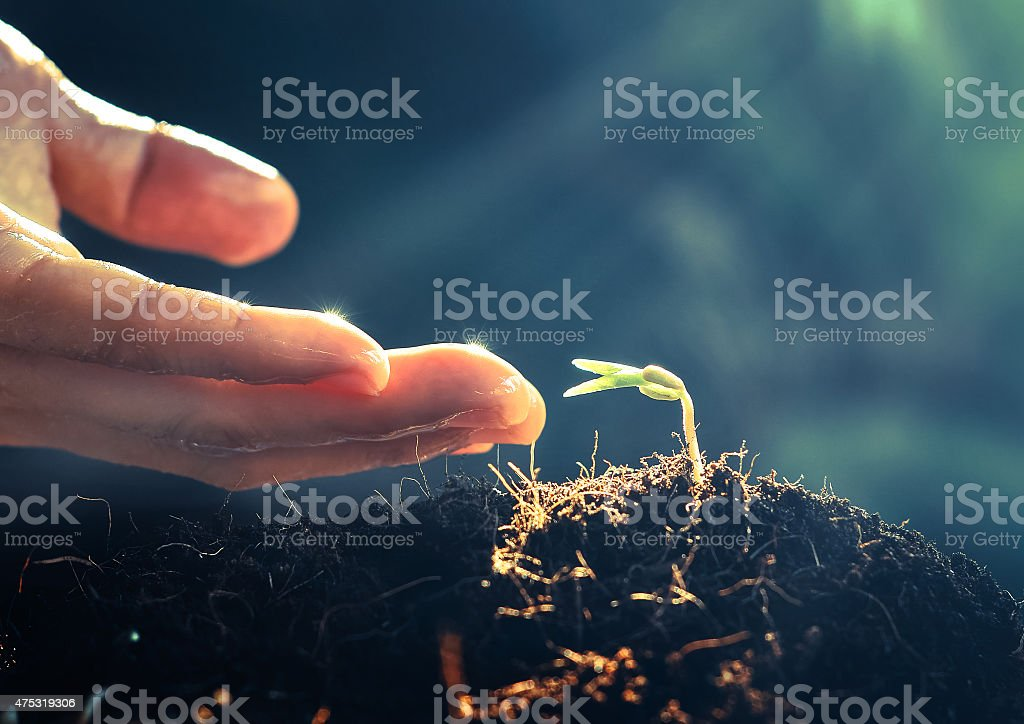 Hand watering young tree stock photo