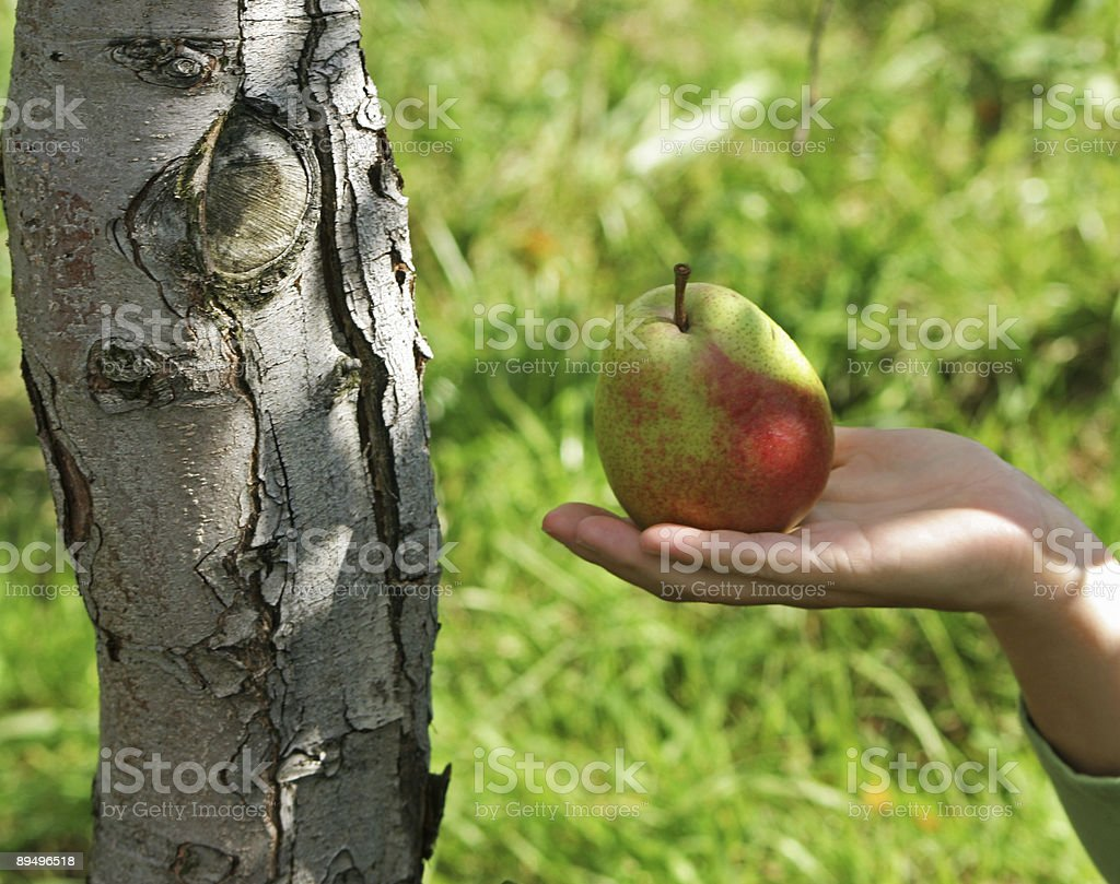 Hand with a pear royalty-free stock photo