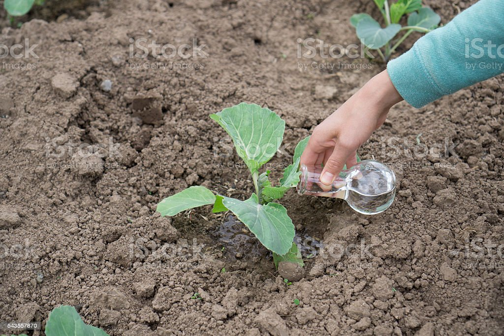 Hand with a test tube and plant. Fertilizer in laboratory stock photo