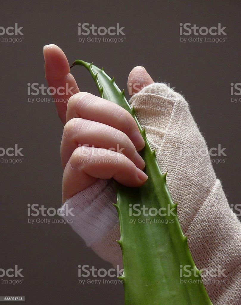 Hand with bandage holding aloe vera leaf stock photo