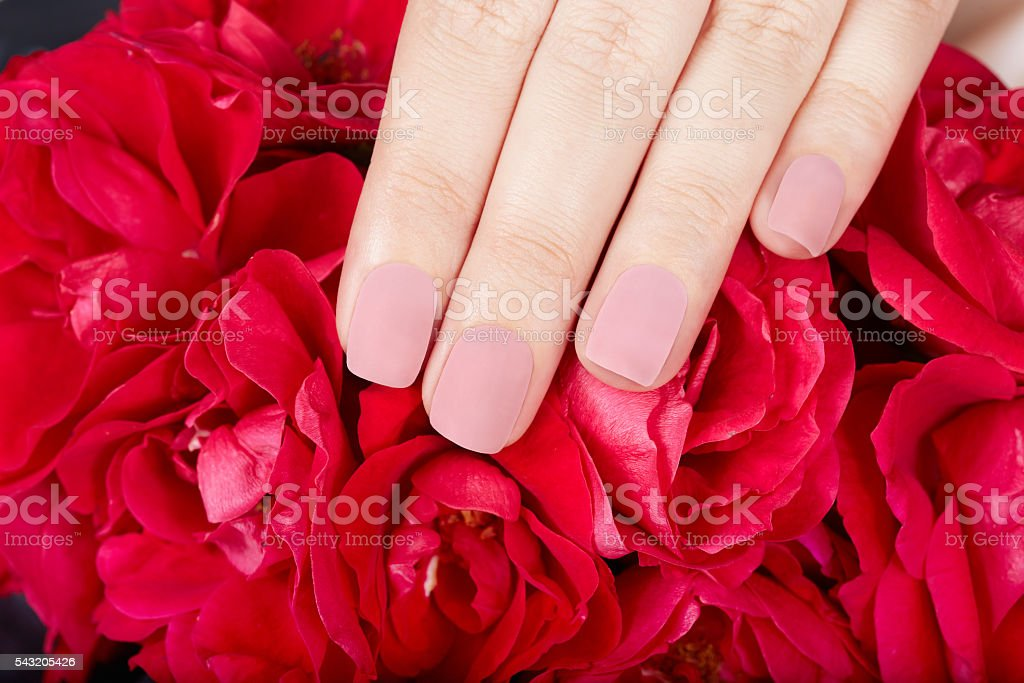 Hand with beige matte manicured nails and red rose flowers stock photo