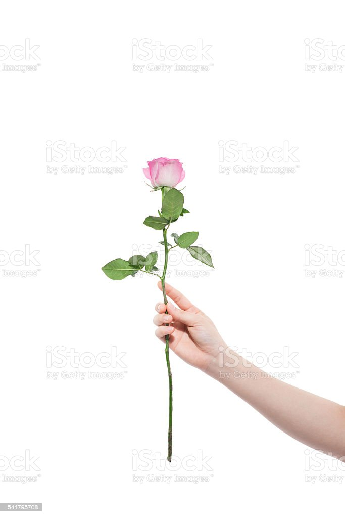 Hand with flower stock photo
