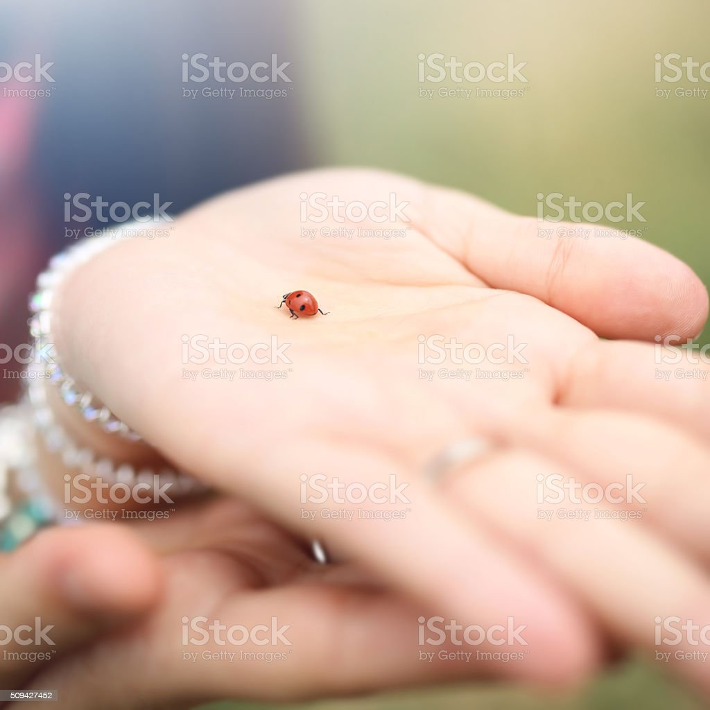 Hand with Ladybug stock photo