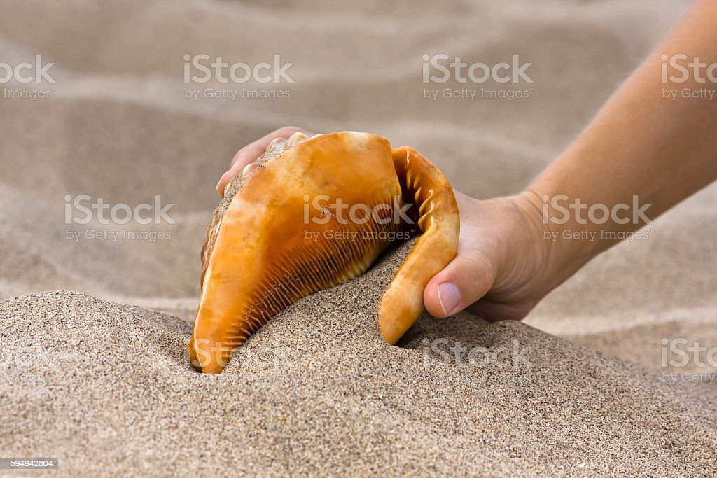 hand with sea shell in the beach stock photo