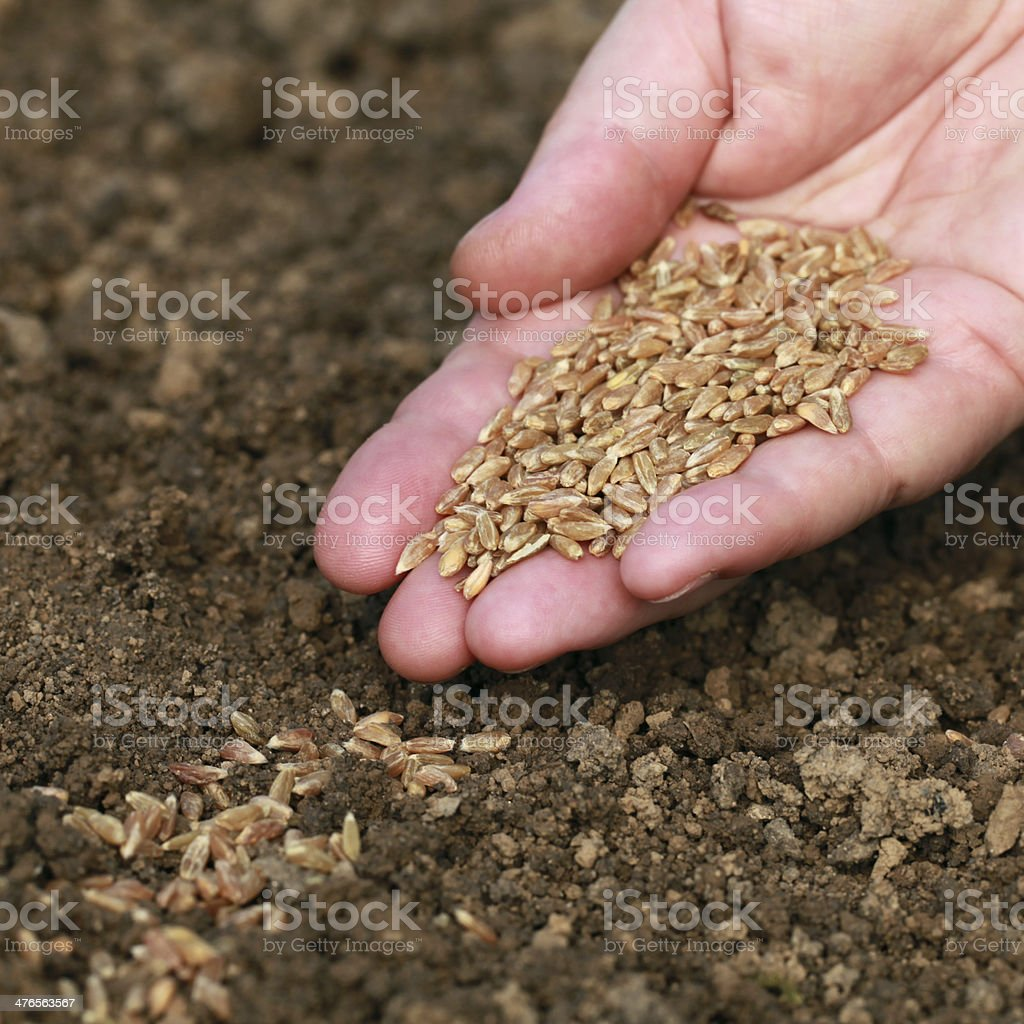 Hand with seeds royalty-free stock photo