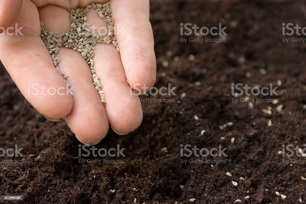 Hand with seeds planting them in soil royalty-free stock photo