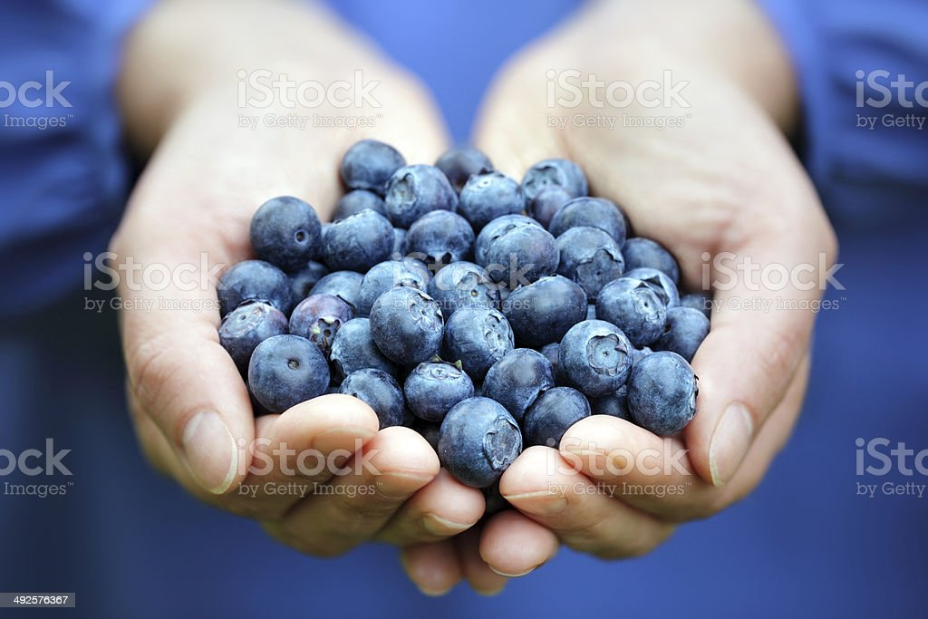 Handful of blueberries stock photo