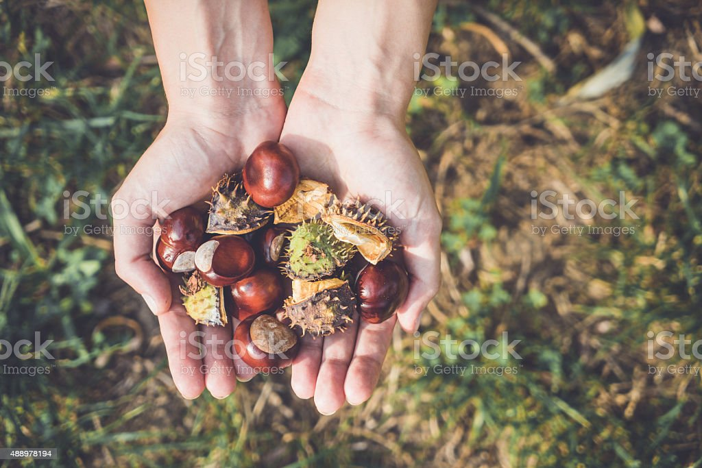 Handful of chestnuts stock photo