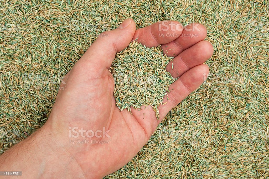 Handful of Grass Seed royalty-free stock photo