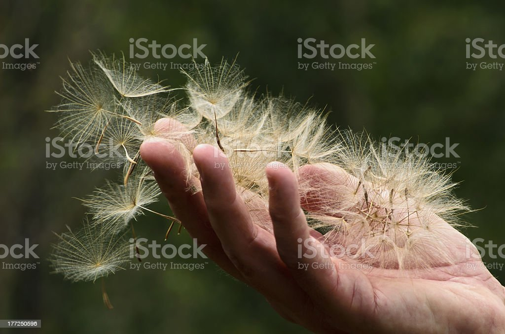 Handful of Seeds royalty-free stock photo
