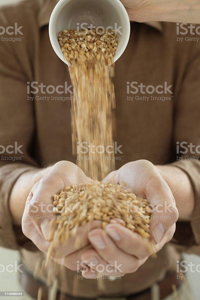 Handful Of Wheat Grains stock photo