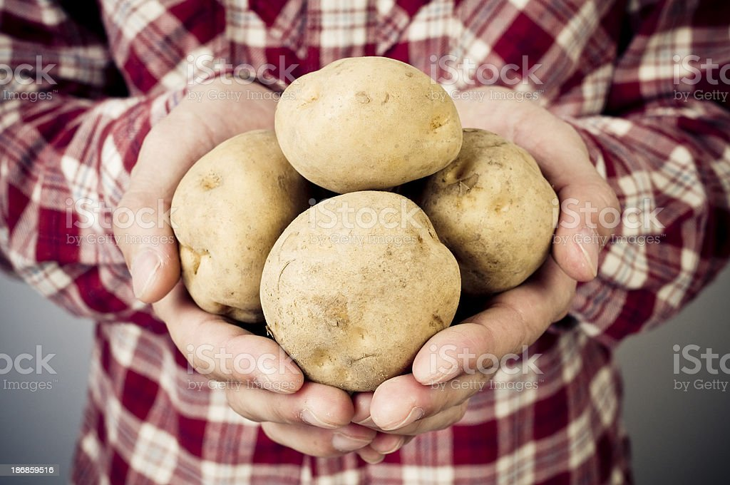 Handful potatoes royalty-free stock photo