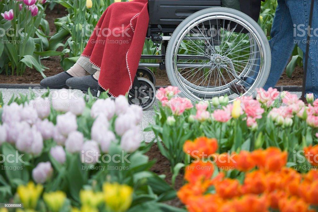 Handicapped senior woman in wheelchair between flowers (XXL) stock photo