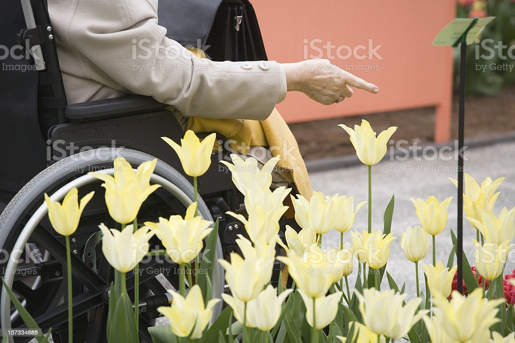 Handicapped senior woman in wheelchair pointing at flower (XXL) royalty-free stock photo