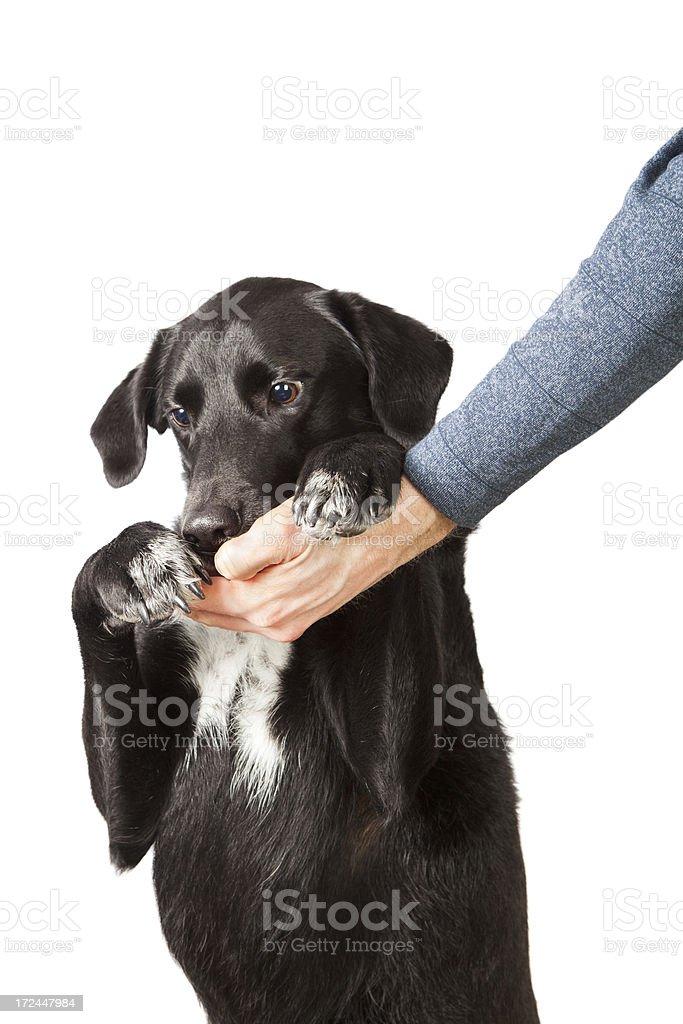 Handing a treat to man's best friend stock photo