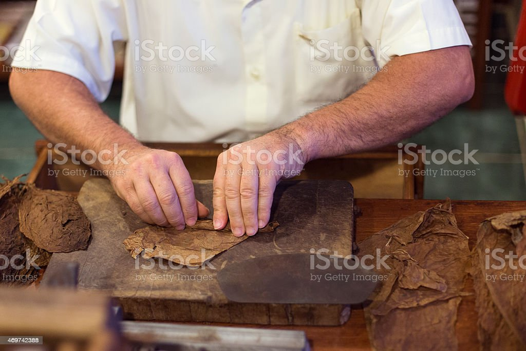 Handmade cigar live preparation stock photo