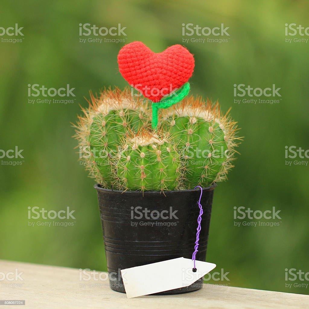 handmade crochet heart on cactus stock photo