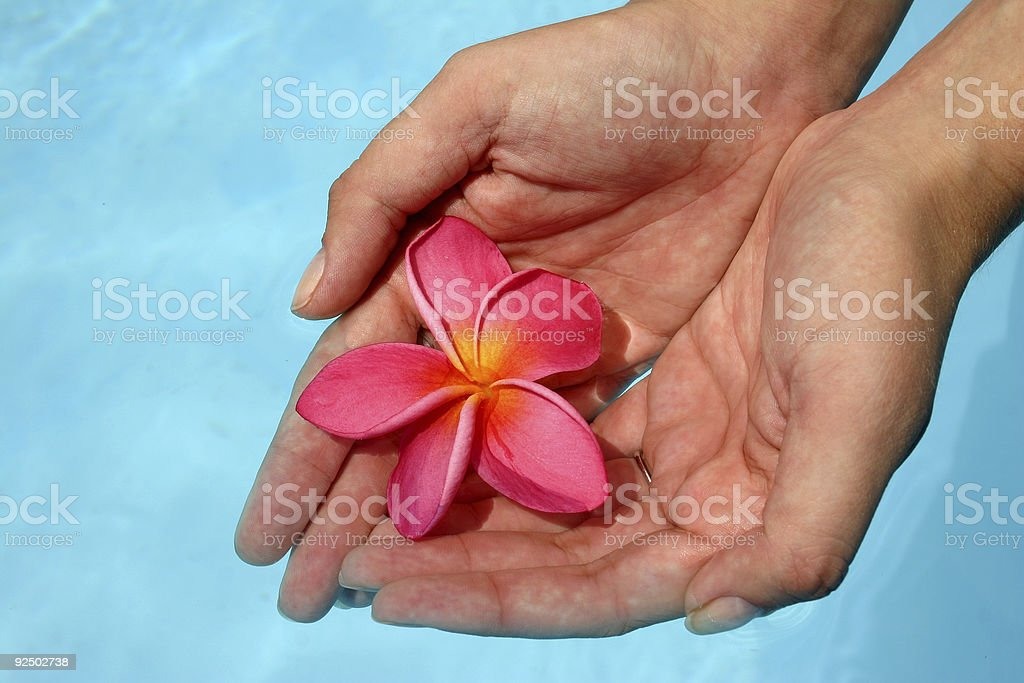 Hands and Flower royalty-free stock photo