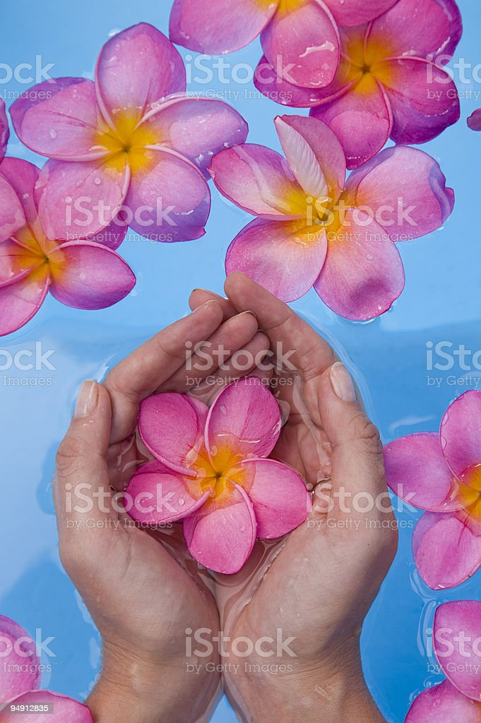 Hands and flower stock photo