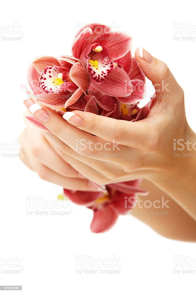 Hands and orchid royalty-free stock photo