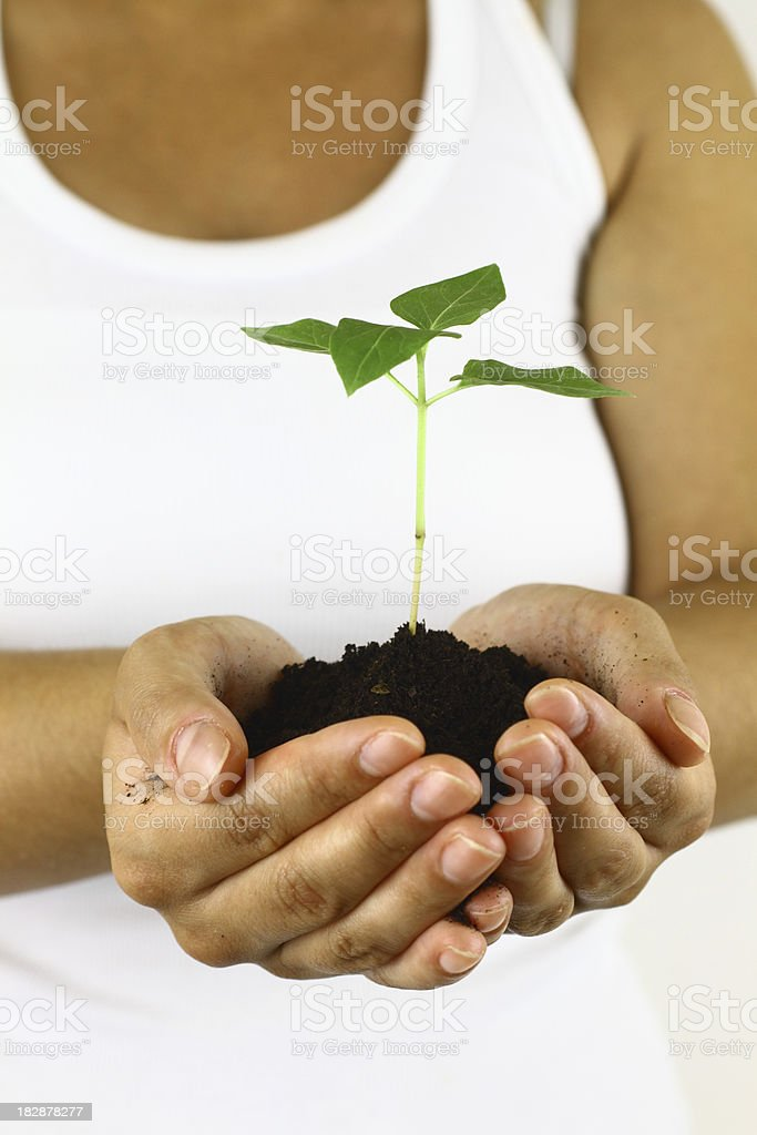 Hands and plant royalty-free stock photo