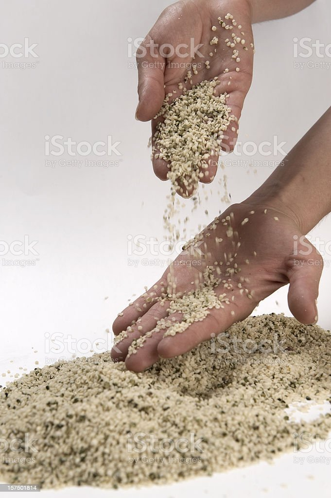 Hands and thousands of hemp seeds royalty-free stock photo