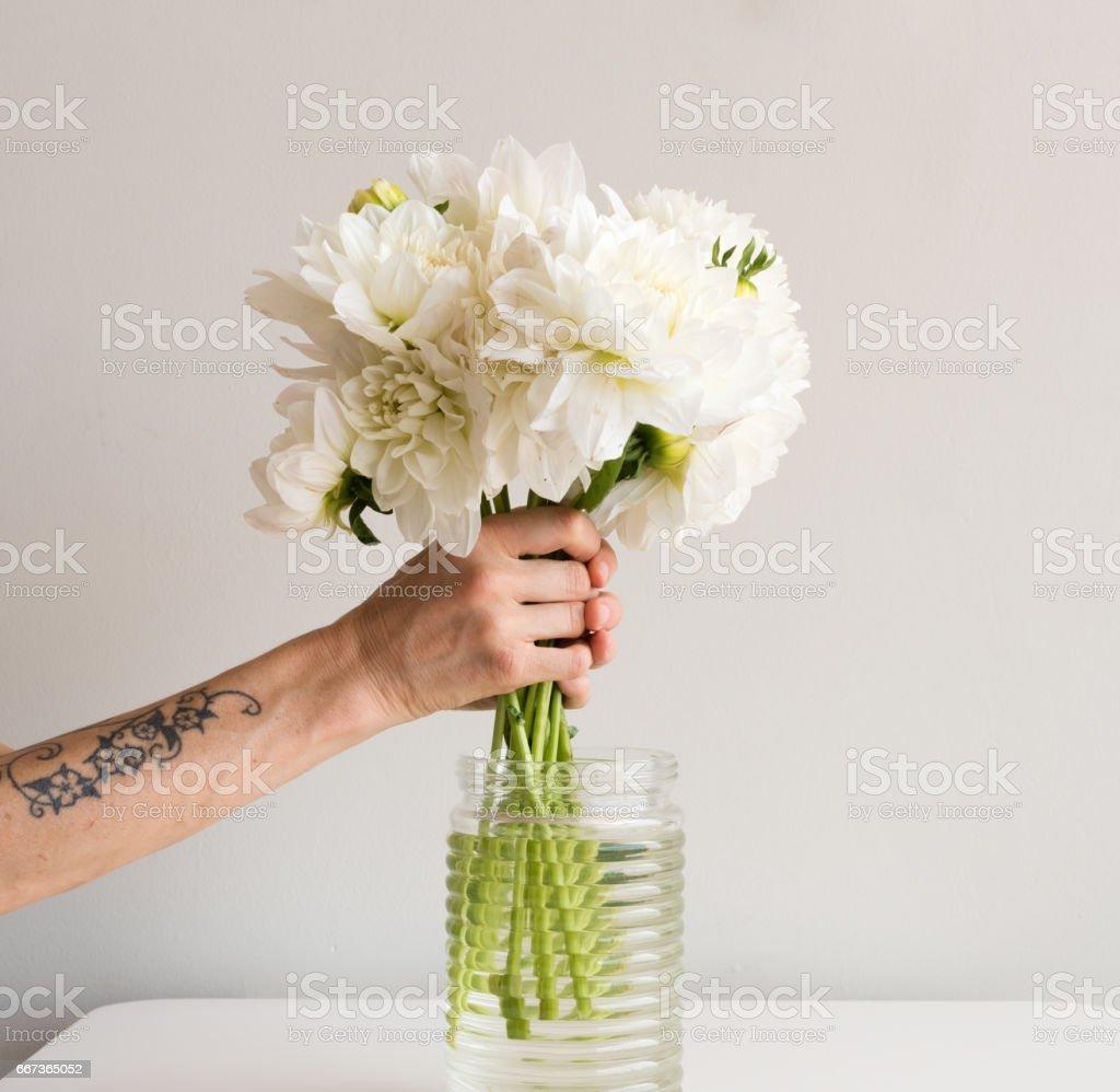 Hands arranging white dahlias stock photo