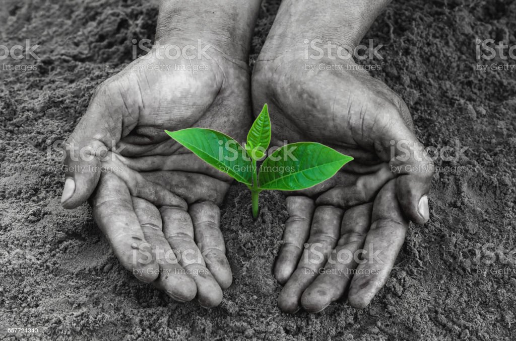 hands black holding and caring a young green plant stock photo